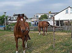 Ferienhaus in Camperduin, Nordseeküste. Kundenbewertung: 5 von 5 Punkten
